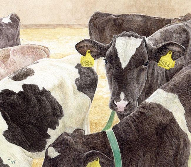 mihotimita-子牛のすきま