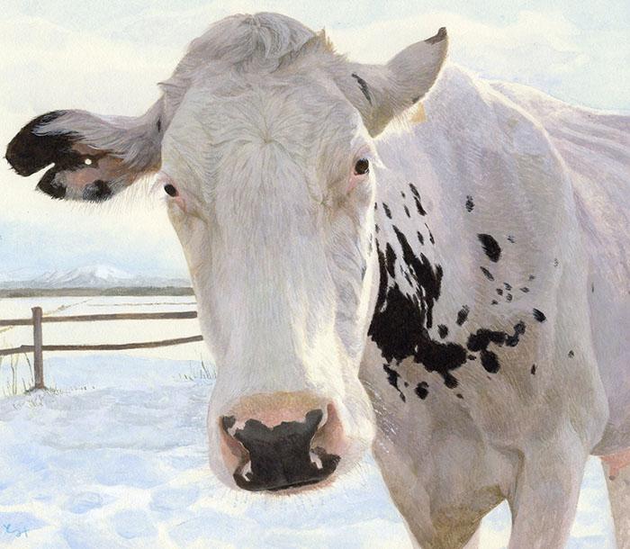 mihotomita-凍れる朝の白い牛