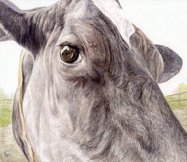mihotomita-年寄り牛の瞳