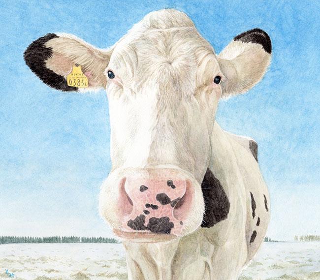 mihotomita-白い牛と冬