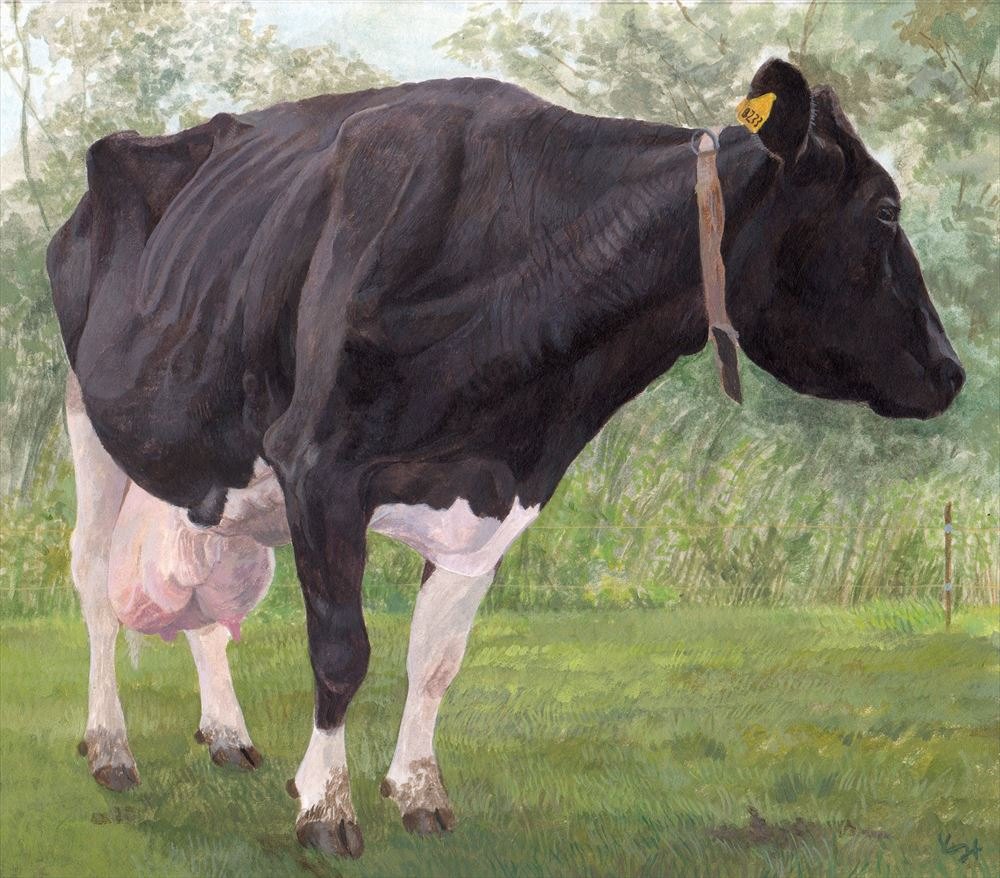 mihotomita-17歳の牛